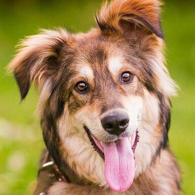Пёс Добрый