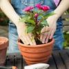 Комнатные цветы  Соль-Илецк