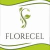 FLORECEL. Стабилизированные растения. Флористика
