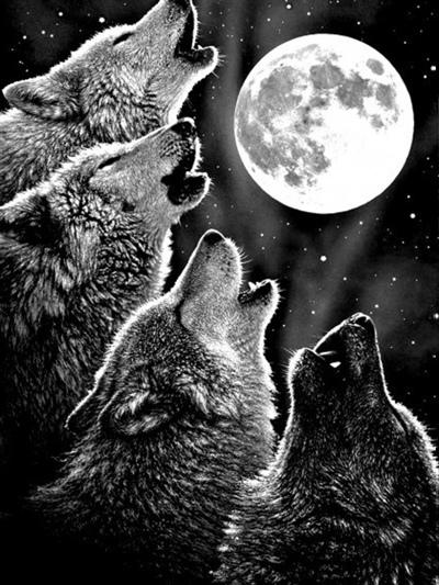 Серый Волк, Нефтекамск