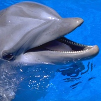 Dolphin 3000