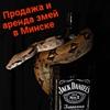 ·٠•●ЗМЕИ●•٠·Продажа и аренда змей в Минске