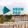 ИБХФ РАН