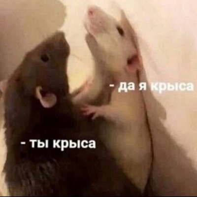Анастасия Панарина'блин, Старый Оскол