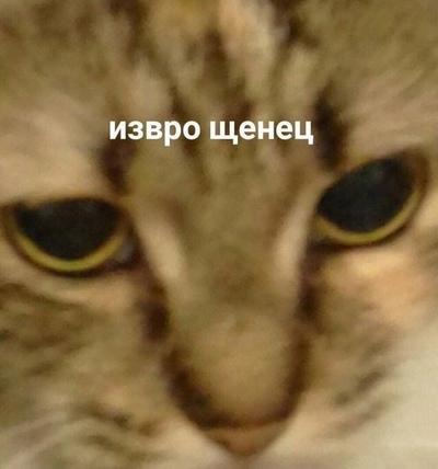 Иван Снегирев, Курск
