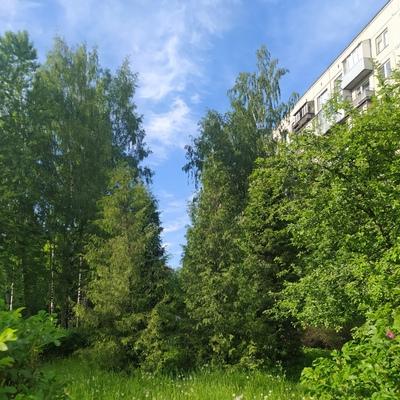 Шурик Неспящий, Санкт-Петербург