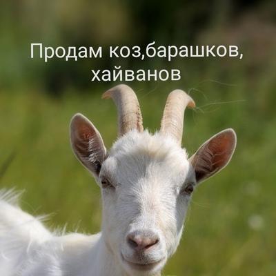 Магомед Магомед, Махачкала
