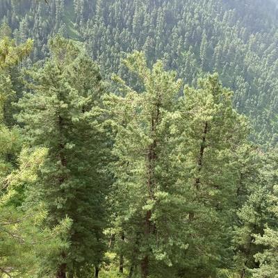 Waheed Khan, Islamabad