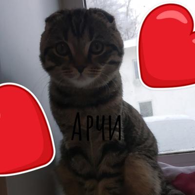 Алексей Корнев, Чапаевск