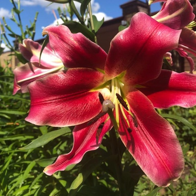 Цветок Нежности