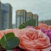 Цветы в жк София All About Flowers
