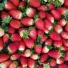 Radiant Berry