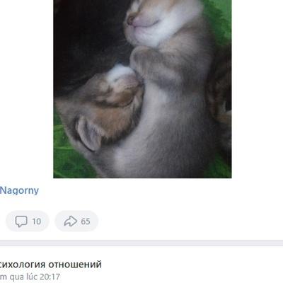 Jagehobu Jacuhuhi, Ростов-на-Дону