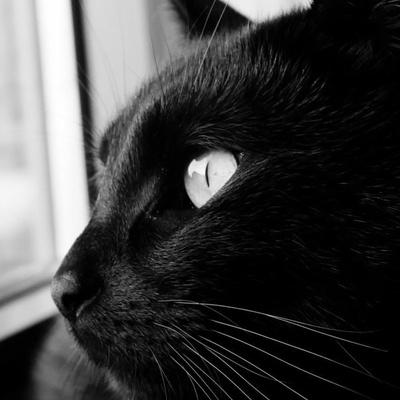 Кошка Чёрная