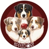 Appledore - Австралийские овчарки