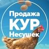 Куры несушки с доставкой по России